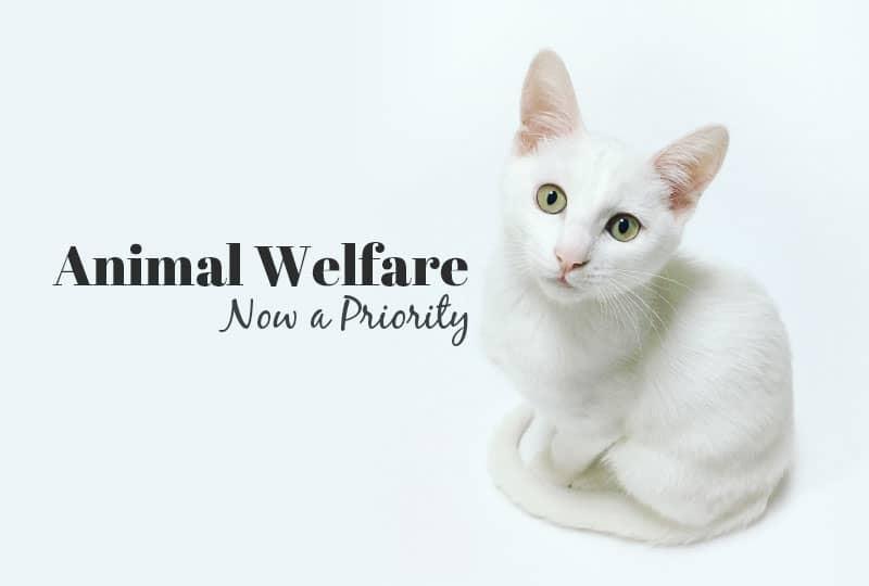 animal welfare in the news